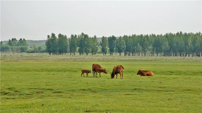 苏泊罕大草原
