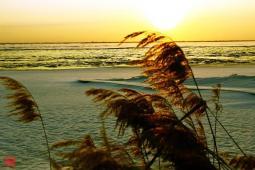 巴彦淖尔|风起的日子,笑魇如花