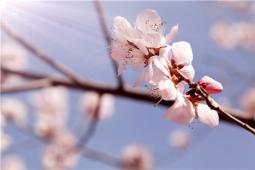 春如四季是一种什么样的体验?来内蒙你就会知道