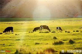 秋之美景,内蒙古更甚!