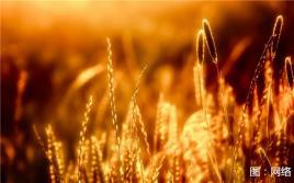 内蒙古:秋来之时,念你风景如画