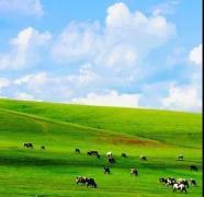 美如天堂的神仙草原