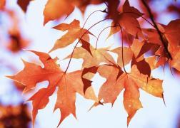 十月赏枫季 | 原来草原上也有枫林?